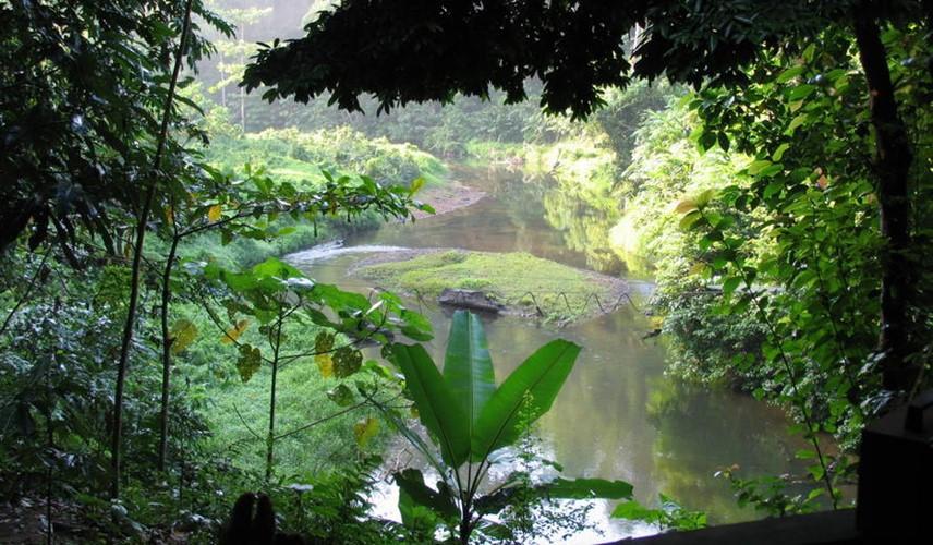 Di sản rừng mưa nhiệt đới đảo Sumatra, Indonesia