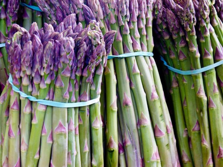 Người Hy Lạp và La Mã đã biết sử dụng măng tây tím để cải thiện nhu động ruột.