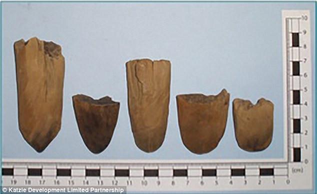 Dấu vết các vật dụng đào bới có cán gỗ được tìm thấy trong vườn.