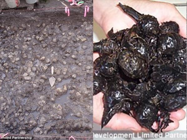 Những củ khoai tây này có kích thước khá nhỏ và rất dễ chế biến.