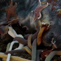 """Đại tiệc """"xác thịt"""" dưới đáy biển chính là một cấp độ mới của """"địa ngục trần gian"""""""