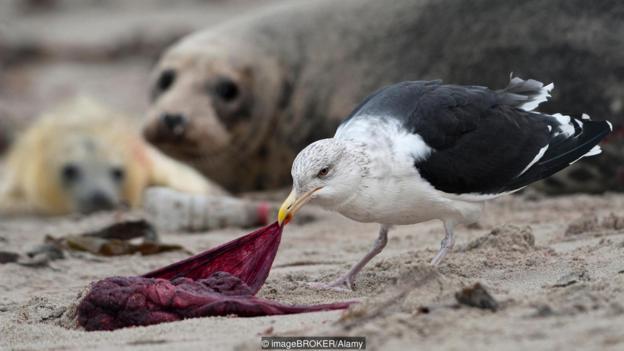Nếu chúng không tự ăn nhau thai của mình, sẽ có con vật khác ăn thay
