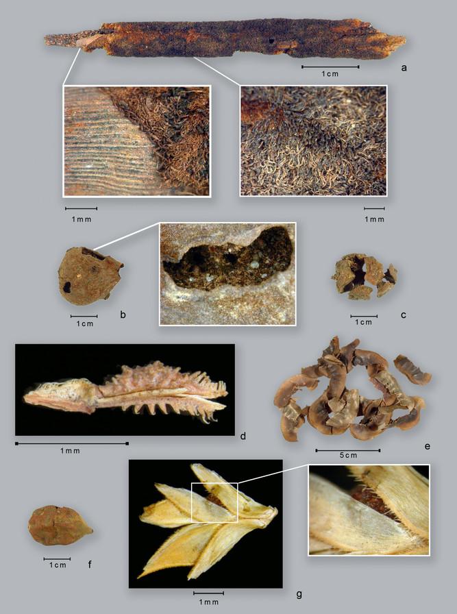 Nhiều bã thực vật được tìm thấy trong các mảnh gốm cổ đại.