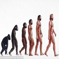 """Đây là bằng chứng cho thấy sự tiến hóa của loài người vẫn còn rất """"lỗi"""""""