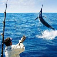 Cá kiếm khổng lồ kéo phăng ngư dân Australia xuống biển