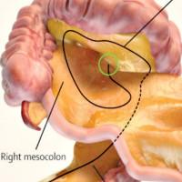 Phát hiện cơ quan mới trong cơ thể người