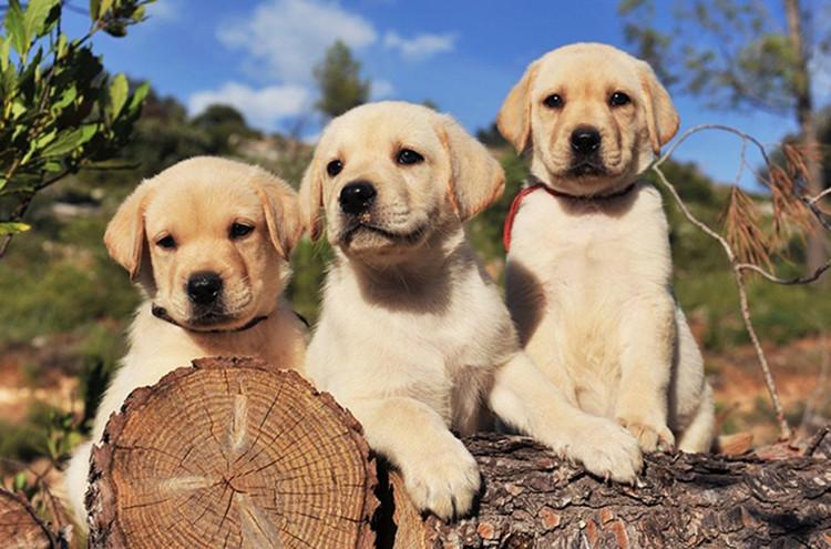 Chó có thị lực kém và mắt chúng không có khả năng thu nhận thông tin về màu sắc
