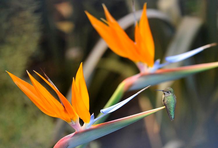 Không nên đứng lâu cạnh loài hoa xinh đẹp này.