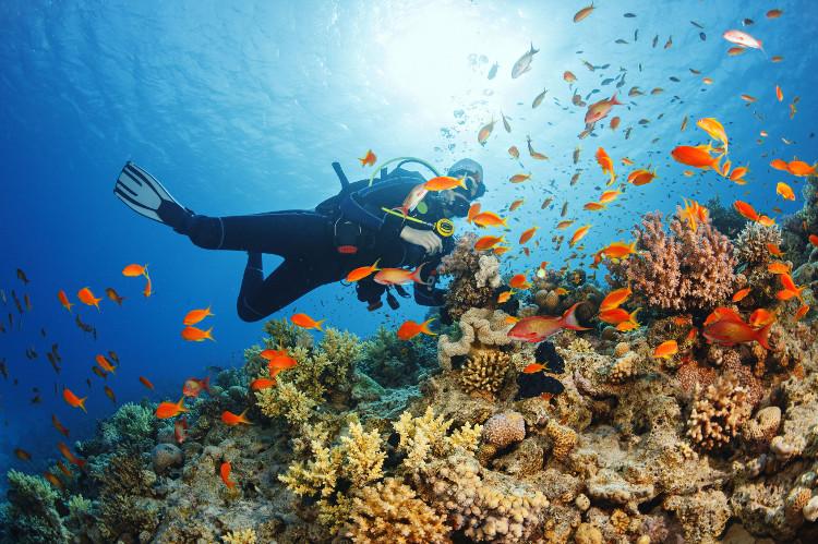 Tấm bản đồ được kỳ vọng sẽ góp phần bảo vệ biển trước những tác động xấu của con người.