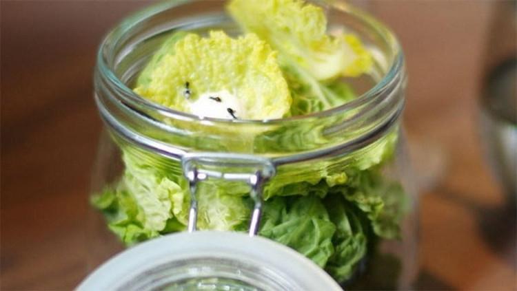 Tại một nhà hàng ở Đan Mạch có món kiến đông lạnh ăn kèm salad và có giá không hề rẻ.