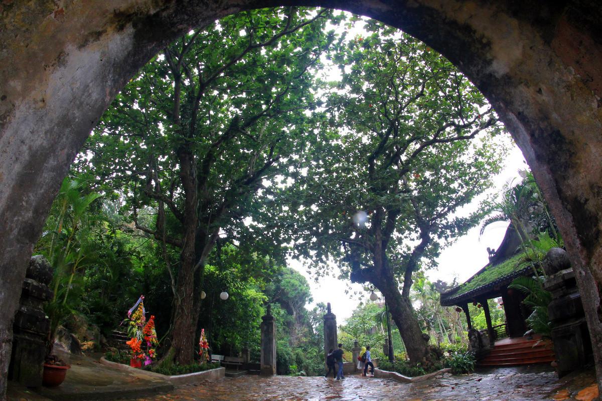 Trong số cây di sản ở Ngũ Hành Sơn vừa được công nhận, có hai cây bàng trước cổng chùa Tam Thai, trên ngọn Thủy Sơn.