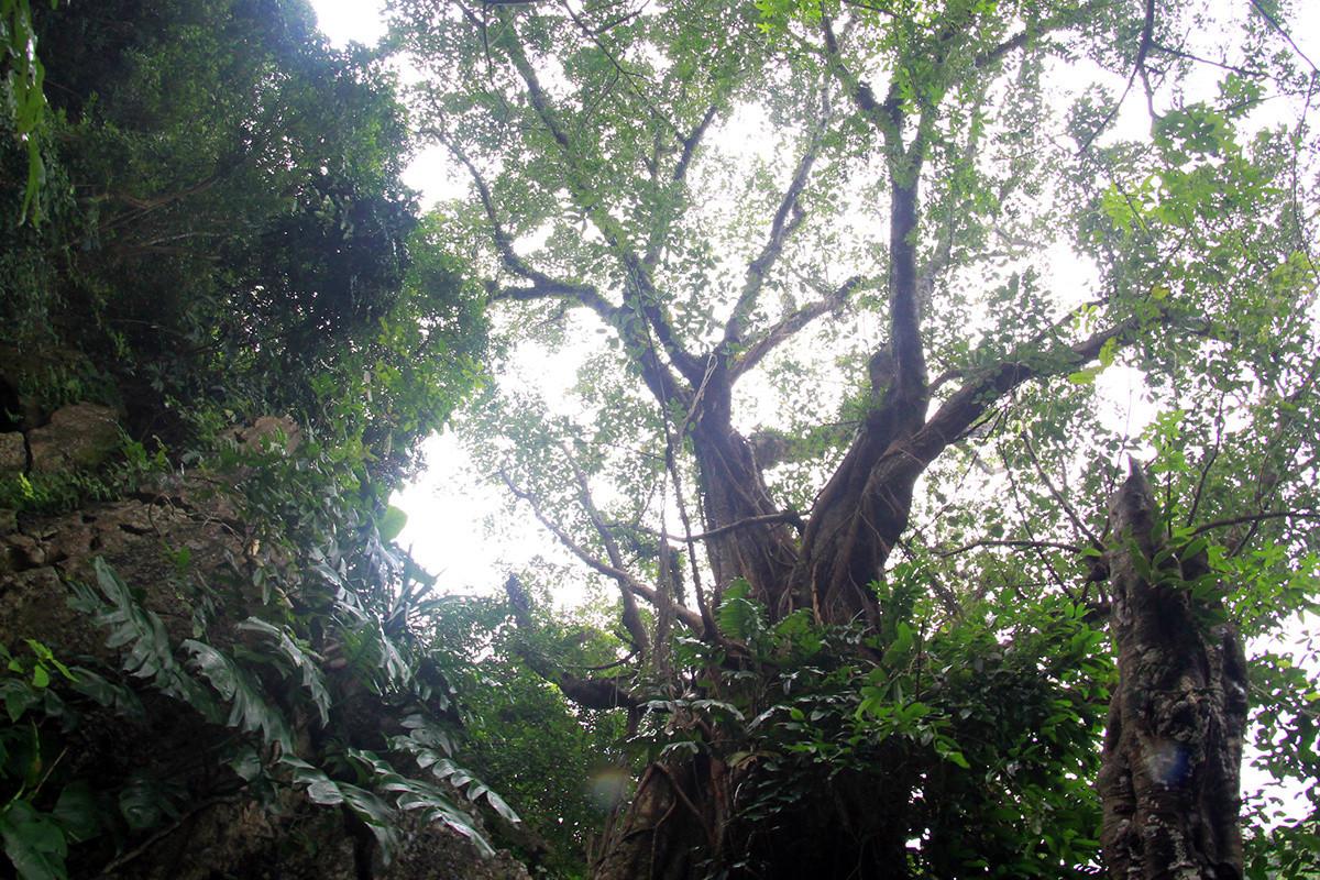 Hội đồng Cây di sản Việt Nam vừa công nhận quần thể 4 loài (7 cây) thuộc Cây di sản Việt Nam là Cây di sản Việt Nam.