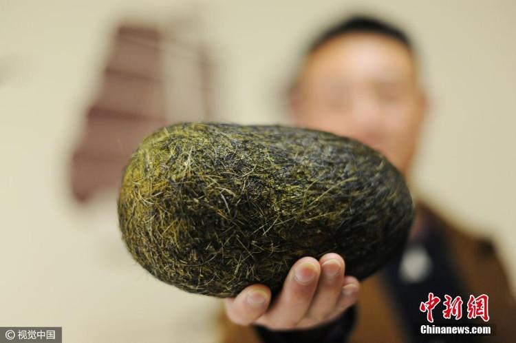Quả trứng nặng hơn 1,2 kg được tìm thấy trong bụng lợn