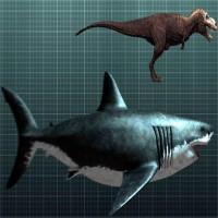Cá mập khổng lồ Megalodon vẫn còn sống dưới biển sâu?