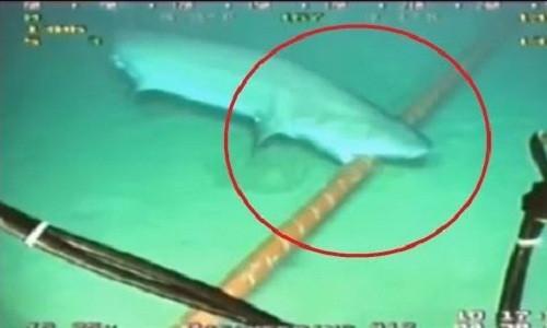 Hình ảnh cá mập cắn sợi cáp quang dưới đáy biển được thiết bị lặn không người lái ghi lại.