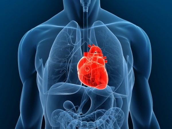 Nghiên cứu đã mở ra những cơ hội mới cho người mắc bệnh tim.