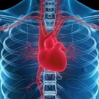 """Liệu trên đời có căn bệnh nào mang tên """"Ung thư tim""""?"""