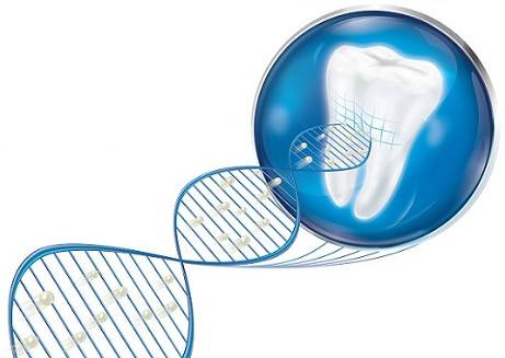 Công nghệ Novamin mang canxi và phốt phát che phủ phần ngà răng bị lộ.