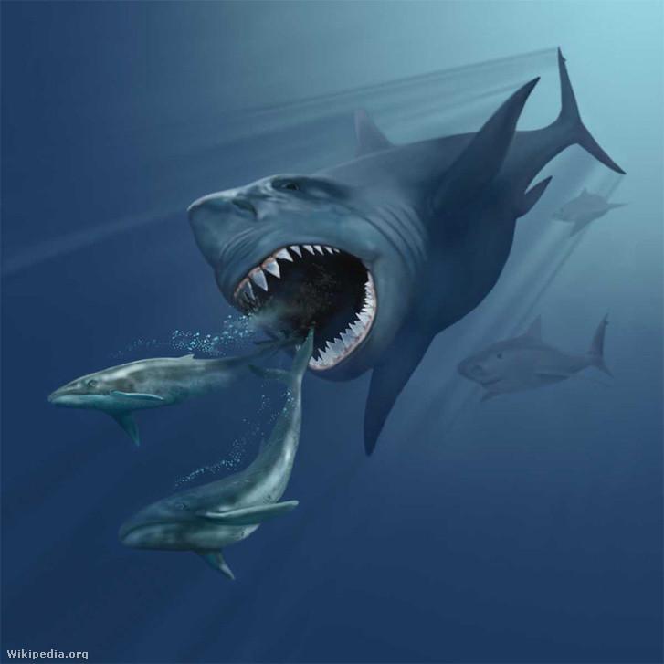 Megalodon lại chỉ ăn cá voi lùn và không thể chuyển sang con mồi khác.