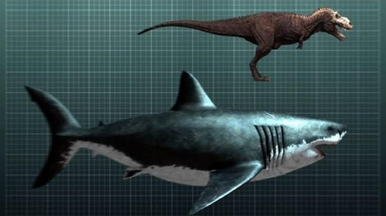 Megalodon và T-rex.
