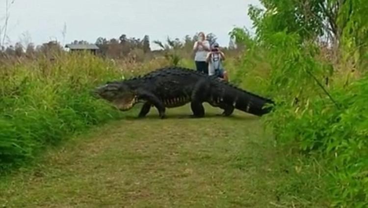 Con cá sấu siêu khủng, to như con khủng long.