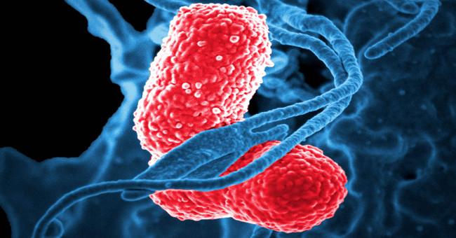 Sức khỏe đời sống-Sự thật đáng sợ về vi khuẩn kháng kháng sinh