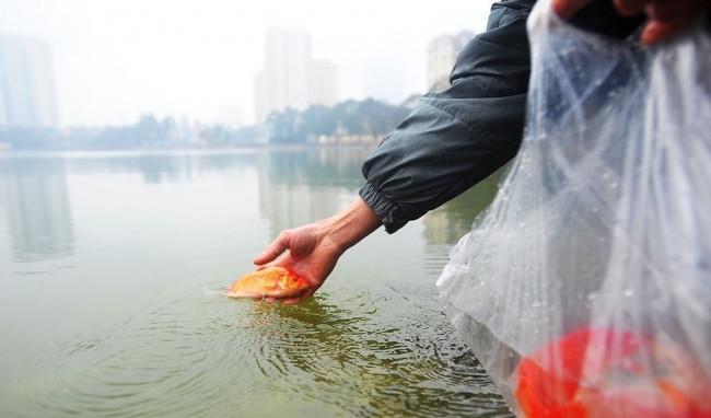 Khi đi phóng sinh cá các bạn cần chọn những ao, hồ nước sạch, không gian rộng và không quá ô nhiễm.