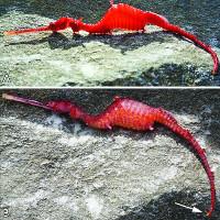 Video: Cận cảnh loài động vật dưới nước được cho là rồng