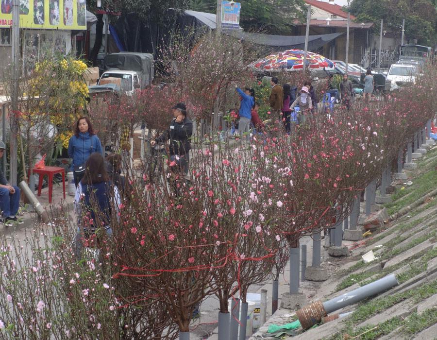 Chợ hoa nằm trên đường Nghi Tàm (Tây Hồ, Hà Nội), thường đông đúc nhất vào buổi sáng sớm. T