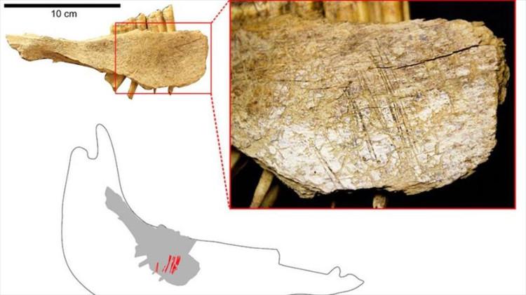 Dấu vết xương động vật phát hiện được tại các hang động ở Bluefish.