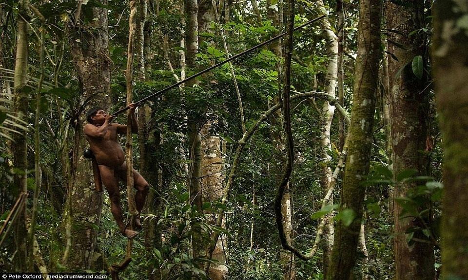 Nhờ leo trèo giỏi, người Huaorani ẩn nấp trên thân cây và theo dõi đường di chuyển của những con khỉ.