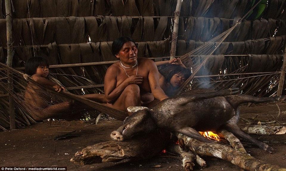 Con lợn rừng, chiến lợi phẩm sau cuộc đi săn, được người phụ nữ Huaorani nướng trên đống củi đỏ rực lửa.