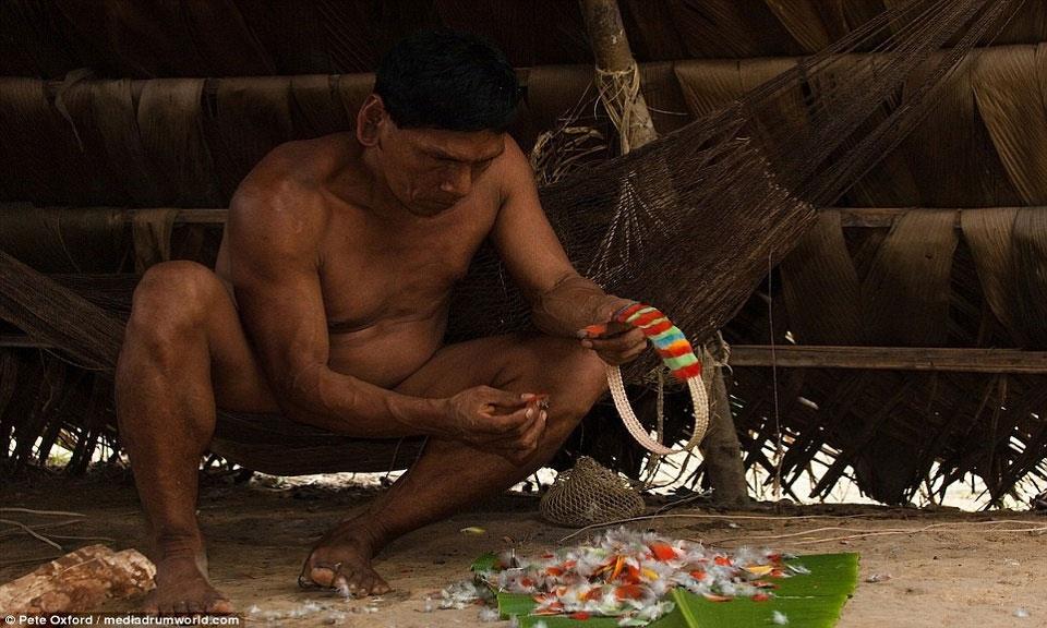 Một người Huaorani xâu chiếc vòng cổ từ lông chim.