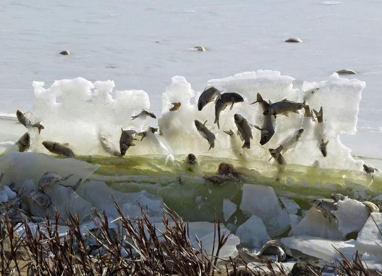 Đàn cá bị đóng băng trên không trung.