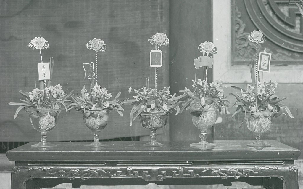 Một trong những nét biểu trưng cho cái tết của người Tràng An xưa không thể không nhắc đến đó chính là thú chơi hoa thủy tiên.