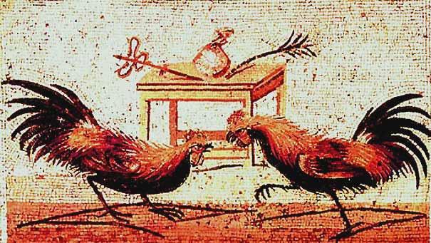 Loài gà vốn không được nuôi để ăn thịt