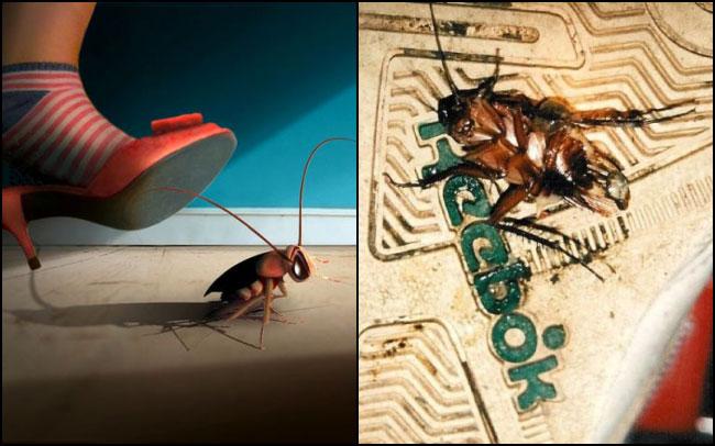 Thay vì đạp chết chúng bằng dép, bạn nên dùng thuốc xịt côn trùng hoặc bẫy bắt gián.