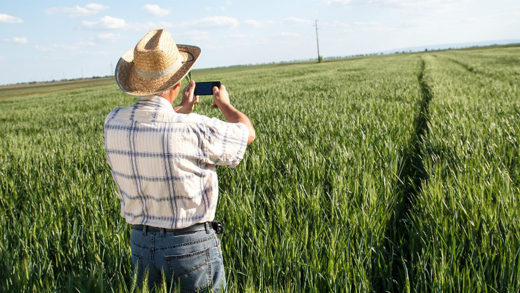 Người nông dân có thể quản lý từ xa cũng như chăm sóc được một diện tích lớn cây trồng.