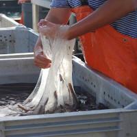 Áo chống đạn bền gấp 10 lần thép từ chất nhầy cá