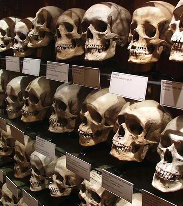 Hiện vật trưng bày trong các viện bảo tàng