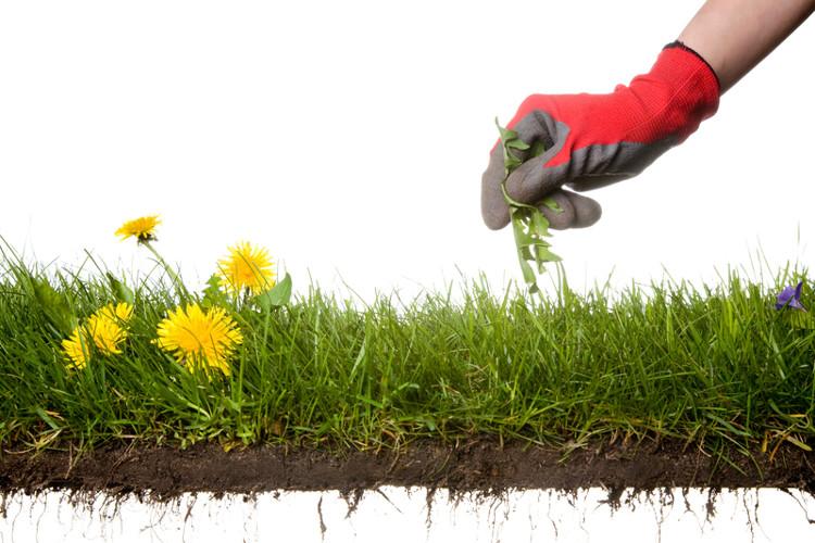 Những loại thực vật thảm sau khi khô lại và mục ruỗng sẽ là nguồn phân bón rất hữu ích cho đất trồng mùa vụ tiếp theo.