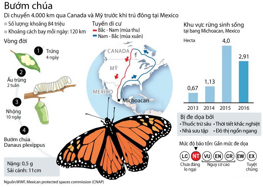 Những thông tin cơ bản về bướm chúa Bắc Mỹ.
