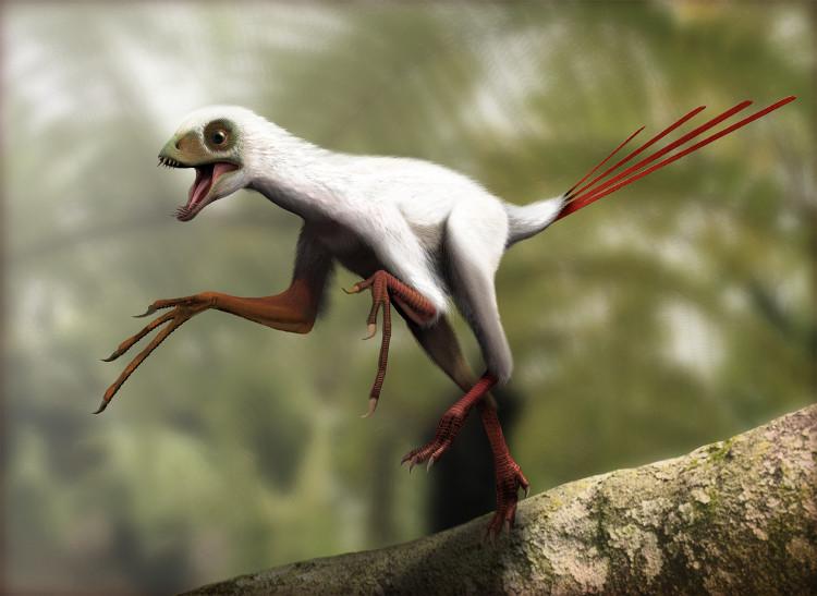 Loài Epidexipteryx không có cánh mà lại có tới 4 chiếc lông đuôi.