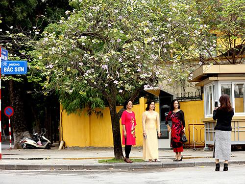 Vẻ đẹp nhẹ nhàng của hoa ban xuất hiện giữa lòng Hà Nội khiến nhiều người xao xuyến và không thể không lưu lại khoảnh khắc này.
