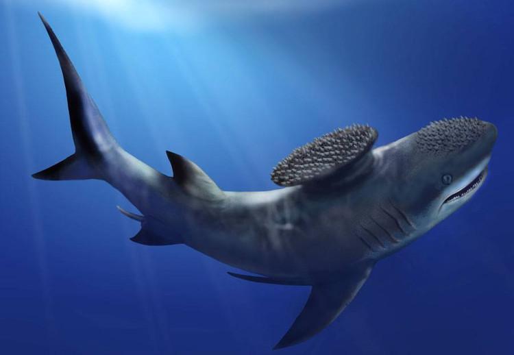 Stethacanthus có ngoại hình khá tương đồng so với loài cá mập hiện đại.