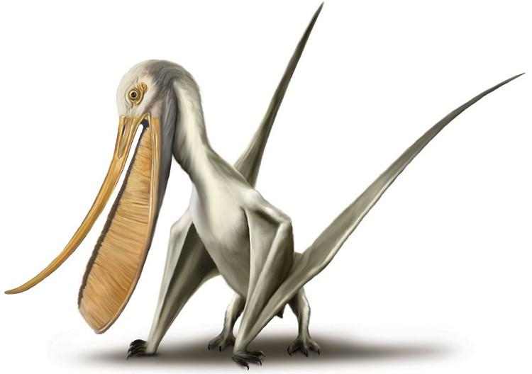 Loài thằn lằn bay Pterodaustro sở hữu bộ răng kì lạ giống như tấm sừng dưới hàm của một vài loài cá voi.