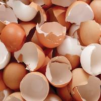Video: Những lợi ích khi ăn vỏ trứng