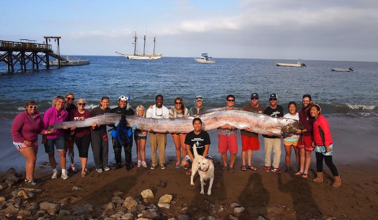Cá mái chèo trôi dạt vào bờ biển California, Mỹ năm 2013.