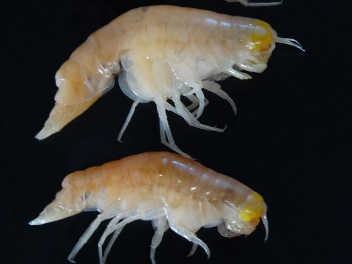 Sinh vật tại nơi sâu nhất hành tinh cũng bắt đầu nhiễm độc.