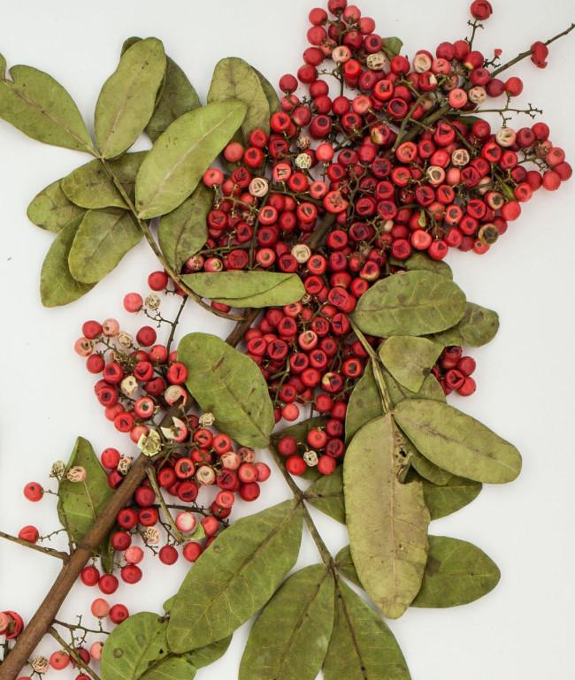 Các thầy thuốc cổ truyền ở vùng Amazon đã sử dụng Peppertree Brazil hàng trăm năm qua để điều trị nhiễm trùng da